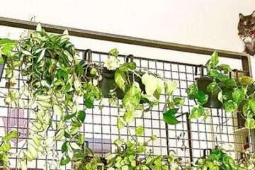 plantas - casa
