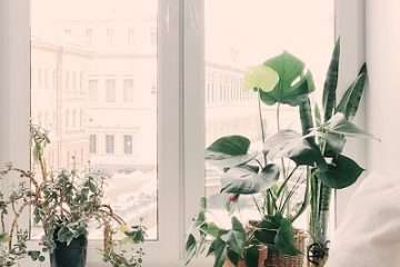 fengshui ventana